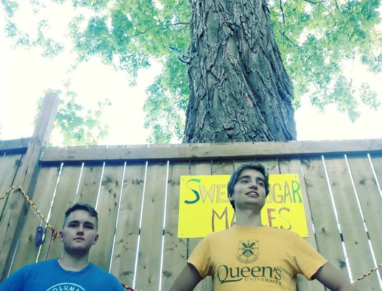 Brothers Daxton Rhead and Tom Deadman are dwarfed by the centuries-old sugar maple tree that looms over the Rhead/Deadman property backyard on the border of the Greystone Village development and Springhurst Park. The boys' father, Richard Deadman, spearheaded the Save Our Trees campaign that succeeded in halting planned destruction of the sugar maples during the ongoing development of the Greystone Village lands.