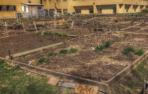 The Community Garden behind Saint Paul University is a good example of how to create food security as part of a Transition Network. Photo by Peter Croal